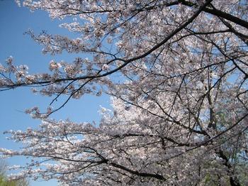 京都 010.jpg