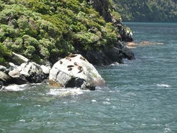 NZ 126.jpg